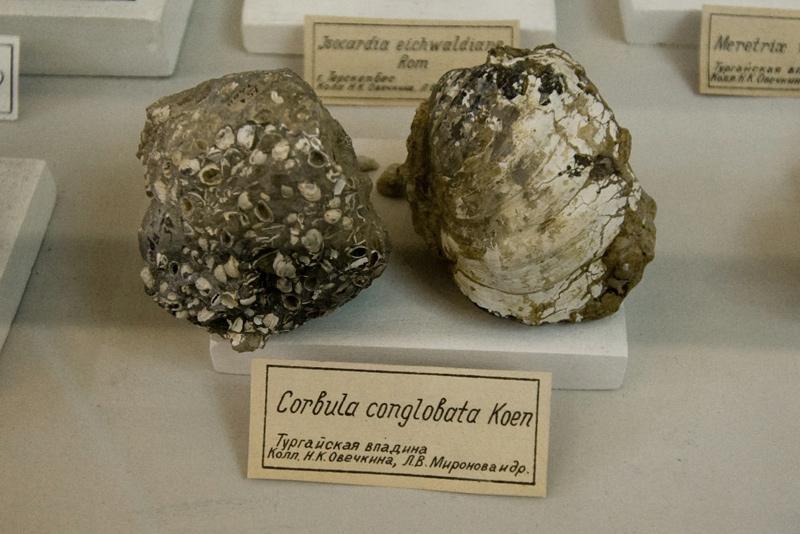 минералы окаменелости геологоразведочный музей