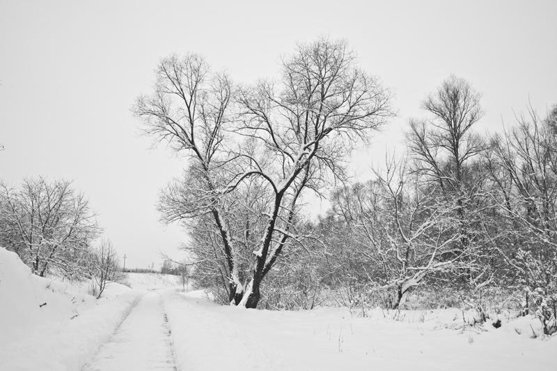 фото лес дивеево монастырь