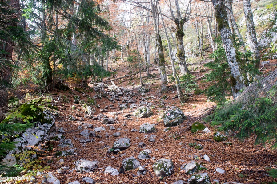 Лес в Дурмиторе, Черногория, 2015 год.