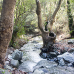 Кипр остров природа